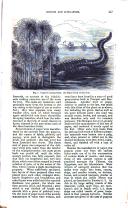 الصفحة 447