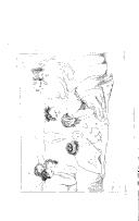 الصفحة xii