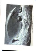 الصفحة 620