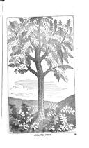 الصفحة 272