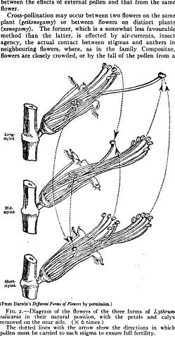 [merged small][ocr errors][ocr errors][merged small][merged small][graphic][merged small][merged small][merged small]