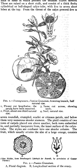 [merged small][graphic][merged small][merged small][merged small][graphic][merged small]