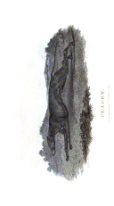الصفحة 520